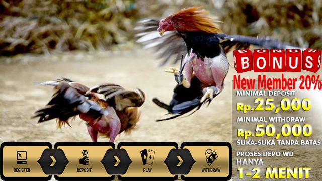 Daftar Judi Adu Ayam Online