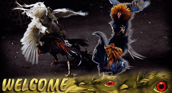 Situs Judi Sabung Ayam S128 Online