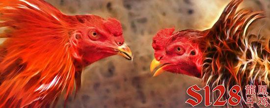 Agen Situs Judi Adu Ayam S128 Online Terbesar