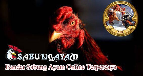 Link Alternatif Bandar Sabung Ayam Online Terpercaya